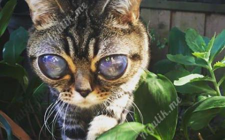 Кошка инопланетянка