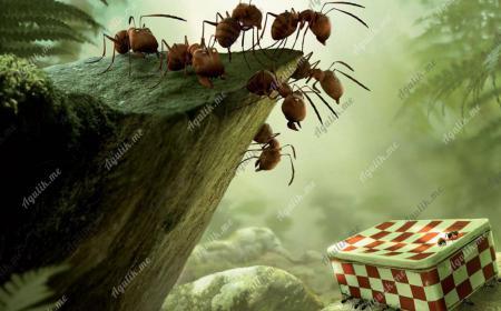 Польза от муравьев и пауков