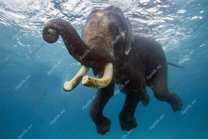 Слон на море