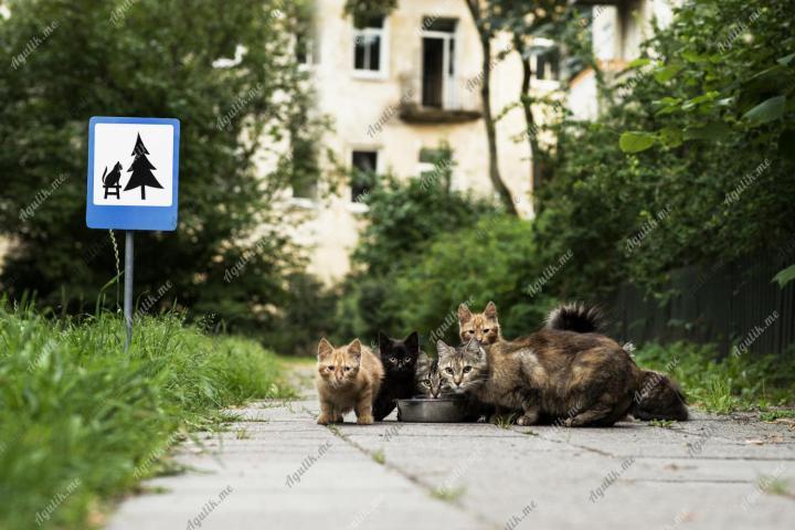 Маленькие дорожные знаки
